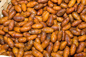 Close-Up Heap Silkworm Pupae Bombyx Mori Larva — Stock Photo