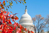 Autumn at the U.S. Capital Building Washington DC Red Leaves — Stock Photo