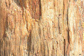 Close-up Full Frame Petrified Wood Bark — Stock Photo