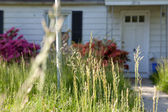 Long Grass Outside Abandoned Cape Cod Single Family Home Marylan — Stock Photo