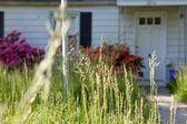 Long Grass Outside Abandoned Cape Cod Single Family Home Marylan — Stock Photo