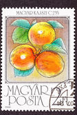 Post Stamp Ripe Orange Apricots Tree Branch Leaves — Stock Photo