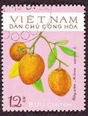 Post Stamp Sapodilla Manilkara Achras Fruit Tree — Stock Photo