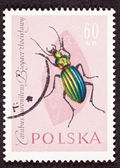 Stamp Carabus Auronitens Duronitens Green Beetle — Stock Photo