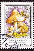 Inocybe Erubescen or Patouillardi Poisonous Mushroom — Stock Photo