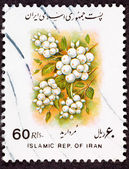 Canceled Iranian Postage Stamp White Berries Sorbus glabrescens — Stock Photo