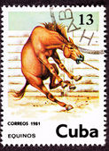 Canceled Cuban Postage Stamp Wild Horse Leaping Corral Lasso Nec — Stock Photo