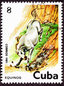 Canceled Cuban Postage Stamp White Horse Running Down Steep Hill — Stock Photo