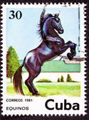 Canceled Cuban Postage Stamp Black Horse Rearing Up in Field — Stock Photo