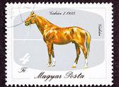Canceled Hungary Postage Stamp Hungarian Horse Breeds Gidran Iso — Stock Photo