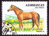 Canceled Azerbaijan Postage Stamp Brown, Kabarda Breed Horse Sta — Stock Photo