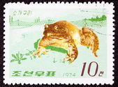 Canceled Korean Postage Stamp Fenced In North American Bull Frog — Stock Photo