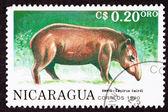 Canceled Nicaraguan Postage Stamp Side View Standing Tapir, Tapi — Stock Photo