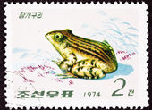 Canceled North Korean Postage Stamp Black Spotted Frog Pelophyla — Stock Photo