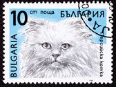 Canceled Bulgarian Postage Stamp Fuzzy Longhaired Himalayan Cat — Stock Photo