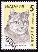 Canceled Bulgarian Postage Stamp Shorthaired Tiger Stripe Cat Br — Stock Photo