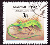 Canceled Hungarian Postage Stamp European Green Lizard, Lacerta — Stock Photo