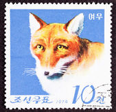 Canceled North Korean Postage Stamp Fox Canidae Head Shoulders I — Stock Photo