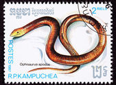 Canceled Cambodian Postage Stamp Sheltopusik, European Legless L — 图库照片