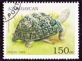 Canceled Azerbaijan Postage Stamp Leopard Tortoise Geochelone Pa — Stock Photo