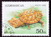 Azerbaijan Postage Stamp Turtle Mata Mata- Chelus Fimbriatus Lea — Stock Photo