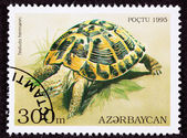 Canceled Azerbaijan Postage Stamp Yellow Hermann's Tortoise Test — Stock Photo