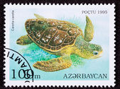 Canceled Azerbaijan Postage Stamp Swimming Loggerhead Sea Turtle — Stock Photo