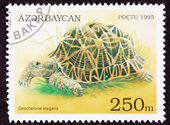 Canceled Azerbaijan Postage Stamp Walking Indian Star Tortoise, — Stock Photo