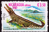 Canceled Nicaraguan Postage Stamp Standing American Crocodile Cr — Stock Photo