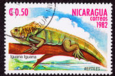 Canceled Nicaraguan Postage Stamp Green Iguana Lizard Branch Mar — Stock Photo