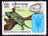 Canceled Cambodian Postage Stamp Big-headed Turtle, Platysternon — Stock Photo