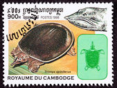 Cambodian Postage Stamp, Spiny Softshell Turtle, Apalone Spinife — Stock Photo