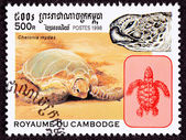 Cambodian Postage Stamp Green Sea Turtle, Chelonia Mydas On Beac — Stock Photo