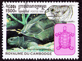 Canceled Cambodian Postage Stamp Aldabra Giant Tortoise Geochelo — Stock Photo
