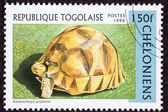 Canceled Togan Postage Stamp Angonoka, Ploughshare, Madagascar T — Stock Photo