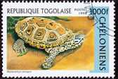 Canceled Togan Postage Stamp Spotted Diamondback Terrapin, Malac — Stock Photo
