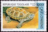 Canceled Togan Postage Stamp Spotted Diamondback Terrapin, Malac — Stock Photo