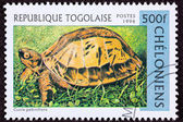 Canceled Togan Postage Stamp Vietnamese Box Turtle Cuora Galbini — Stock Photo