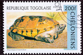Canceled Togan Postage Stamp Orange Mexican Musk Turtle, Staurot — Stock Photo