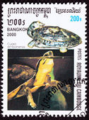 Canceled Cambodian Postage Stamp Amboina Box Turtle Cuora Amboin — Stock Photo
