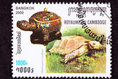 Canceled Cambodian Postage Stamp Impressed Tortoise, Manouria im — Stock Photo