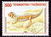 Canceled Tajikistan Postage Stamp Common Wonder Gecko, Lizard, T — Stock Photo