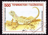 Canceled Tajikistan Postage Stamp Sunwatcher Toadhead Agama, Liz — Stock Photo