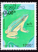 Canceled Laotian Postage Stamp Sitting European Tree Frog Hyla A — Stock Photo