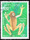 Canceled Laotian Postage Stamp Brown Frog Hyalinobatrachium Vire — Stock Photo