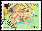Canceled Laotian Postage Stamp Marine Cane Toad Bufo Marinus — Stock Photo