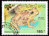Canceled Laotian Postage Stamp Marine Cane Toad Bufo Marinus — Stock Photo