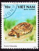 Canceled Vietnamese Postage Stamp Golden Coin Turtle cuora trifa — Stock Photo