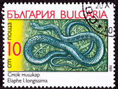 Canceled Bulgarian Postage Stamp Aesculapian Rat Snake, Elaphe L — Stock Photo