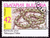 Canceled Bulgarian Postage Stamp Coiled European Cat Snake, Tele — Stock Photo